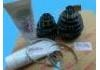 CV Joint Kit:04427-12060  ZZE122